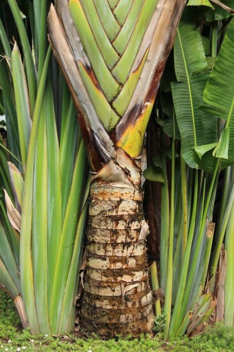 Vegetation in Buja