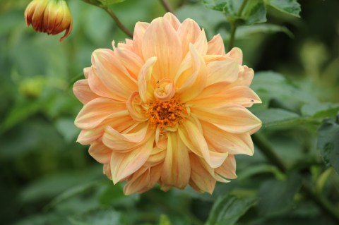Gisenyi flowers