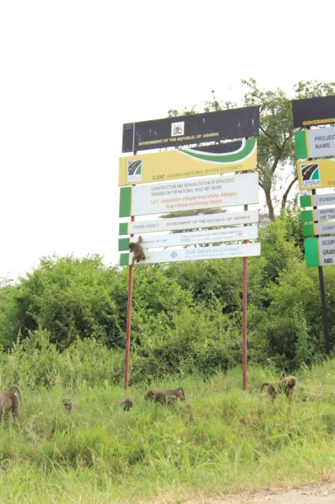 Entering Queen Elizabeth Park, Uganda