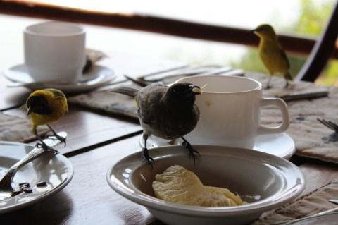 Friends at breakfast
