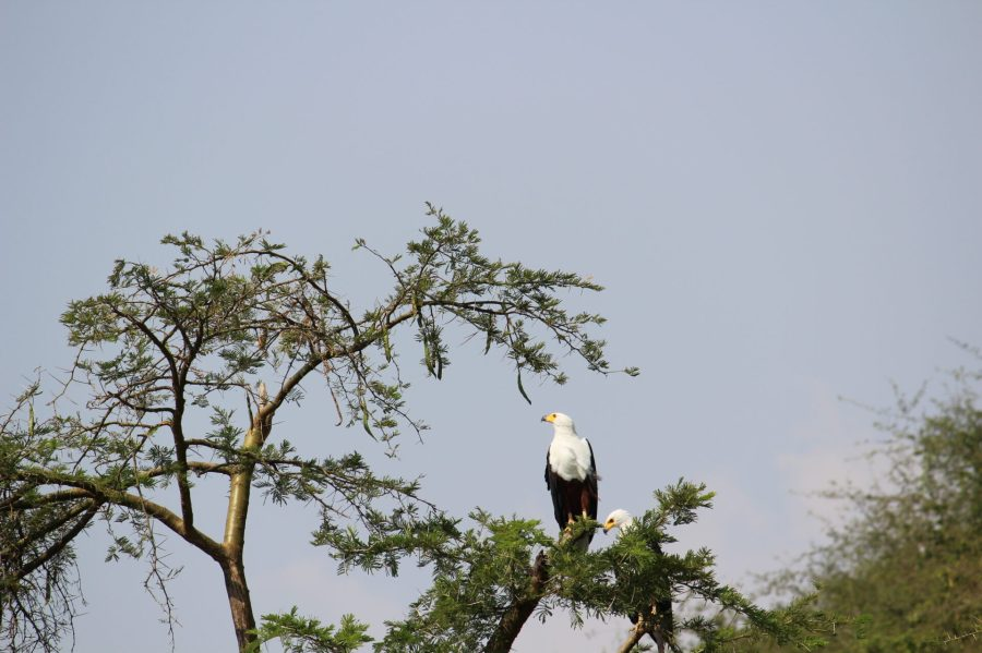Kazinga Channel Cruise