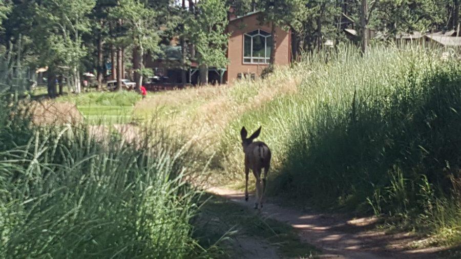 Golfing Evergreen 9th Hole Tee-Off Deer Companion