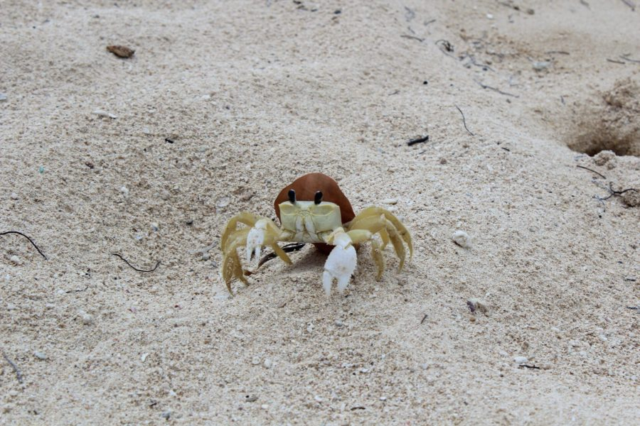 Crab on Playa Ancon