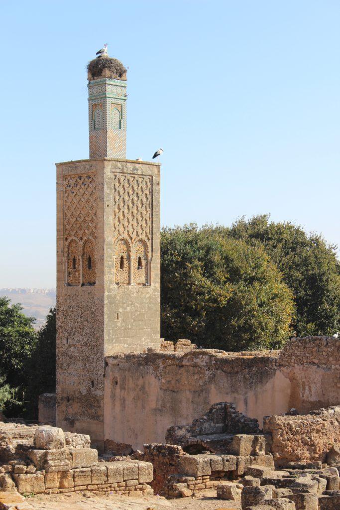 Storks at the Rabat Necropolis