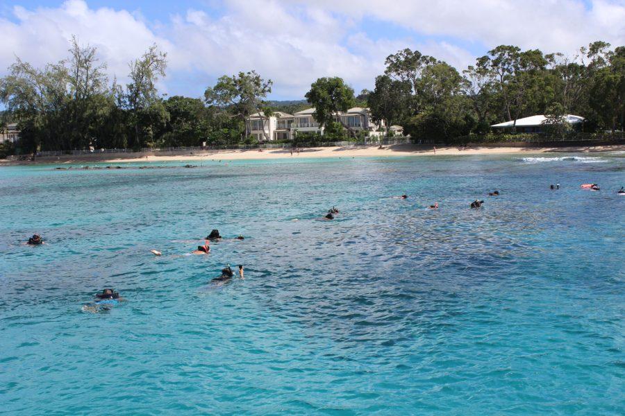 Snorkeling in Barbados
