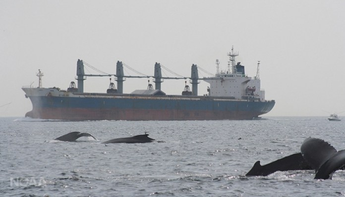 whales and shipping noise