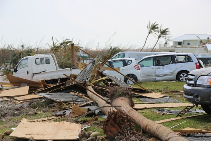 damaged cars and trees