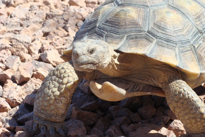 Tortoise headshot