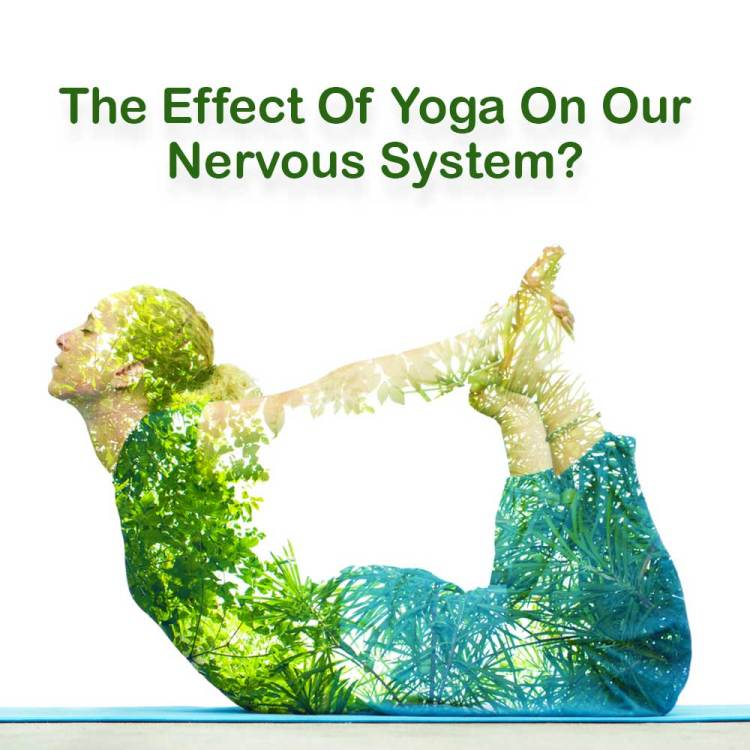 What Could Be The Effect Of Yoga On Our Nervous System?
