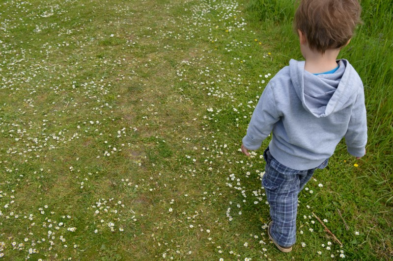 Walking in the daisies