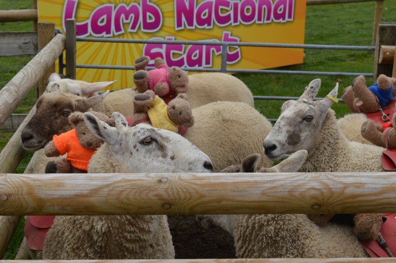 The Lamb National at Mead Open Farm