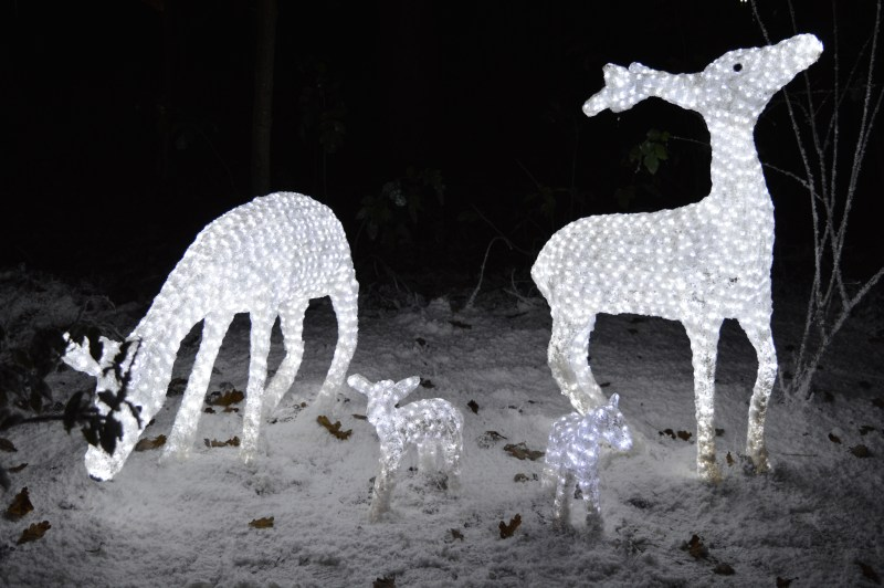 Illuminated deer at Center Parcs
