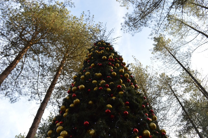 A Christmas tree at Center Parcs Winter Wonderland