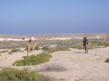 Hitchhiking the mighty ship of the desert, Ras-al Jins