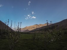Apple tree blossom, Ait Bougemez (Happy Valley)