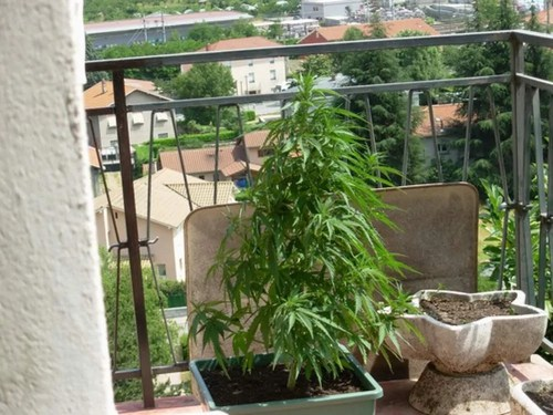 Balcony grow