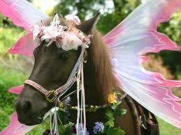 Drugs, Ponies & Birthdays