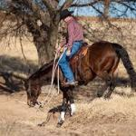 riding instructor newsletter