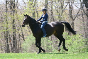 theridinginstructor.net Warm up your lessons with bareback riding