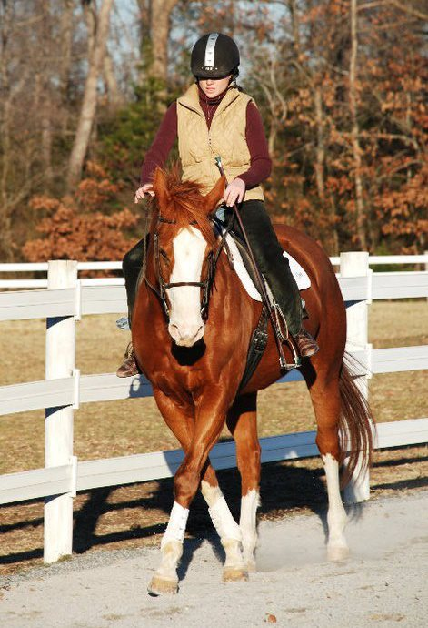 Riding Instructor – Shannon Christ