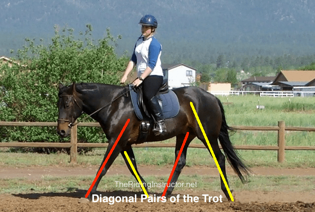 Why Do You Teach Trot Diagonals in Horseback Riding Lessons?