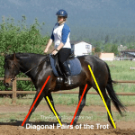 Teach Trot Diagonals