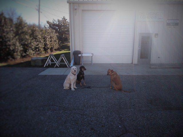 Rigging Dog Pack. Sailboat rigging and dogs go hand in hand. The rigging company.