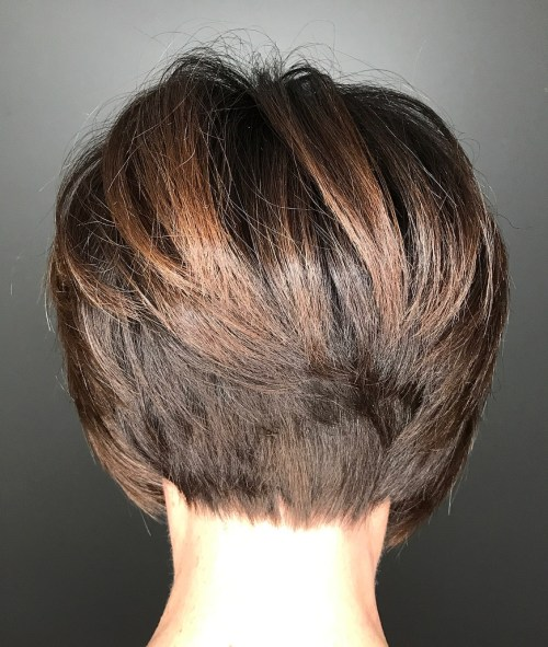 Brown Stacked Pixie Bob