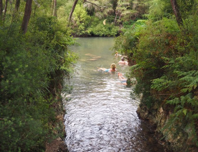 Bridge Hot Spring, Waiotapu, New Zealand