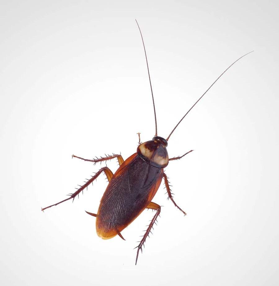 Thermo-bug hilft auch gegen Schaben