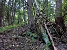 trees_trail_whetstone