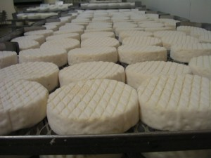 Aging brie (Courtesy of Marin French Cheese Company)