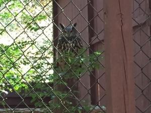 Owl in enclosure