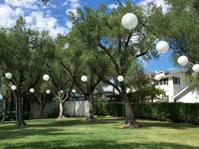 B.R. Cohn olive grove