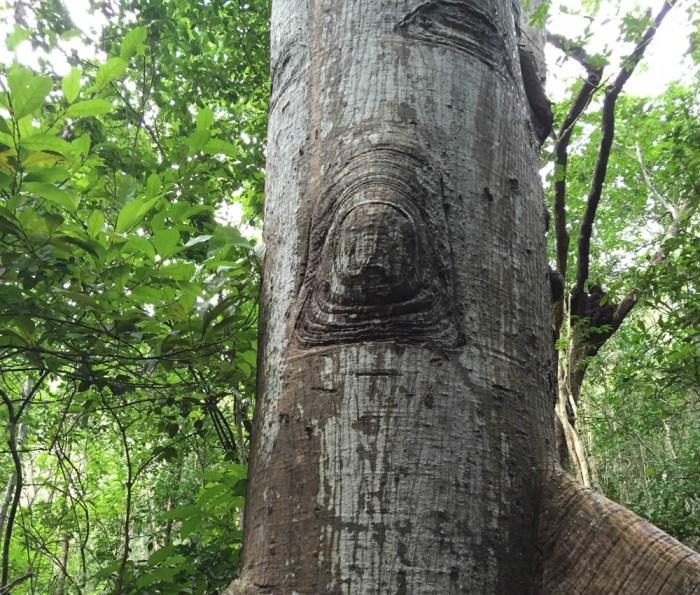 Elephant hide tree trunk