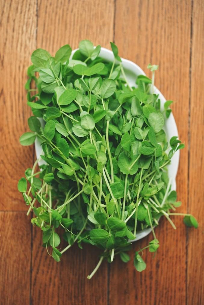 Scallion Green + Pea Shoot Pestos   The Roaming Kitchen