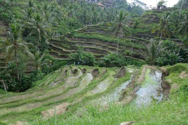 Things to do in Bali, off the beaten track Bali, Off the beaten path Bali, alternative things to do in Bali, tourists, is bali too touristy, too many tourists in Bali, waterfalls, rice terraces, temples, real Bali, Authentic Bali, scooter Bali, hiring a scooter in Bali, Tegenungan Waterfall, Gitgit waterfal, Munduk Waterfall, Aling Aling Waterfall, Sekumpul Waterfall, NungNung Waterfall, Mt Agung, Mt Batur, live volcano Bali, hiking Bali, adventure Bali, Tanah Lot, Besakih Temple, Pura Tirta Empul, Pura Ulun Danu Beratan, Pura Dalem Agung, Goa Gajah, Ubud, best places to stay in Bali, away from the tourists, Gunung Kawi, Ubud Palace, Tegallaland rice terraces, price, Jatiluwih rice terraces, hindu festivals, festivals Bali, Beaches, dirt bike, Surfing, local culture, gate, Monkey forest, sacred monkey temple, monkey on head Bali, Java, transport, ferry