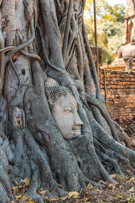 The famous buddha head in the tree, Ayutthaya day trip from Bangkok, Ayutthaya tour from Bangkok, Getting to Ayutthaya from Bangkok, Ayutthaya day tour from Bangkok, bus Bangkok to Ayutthaya, train Bangkok to Ayutthaya, how to get to Ayutthaya from Bangkok by train, day trip to Ayutthaya from Bangkok, Bangkok to Ayutthaya train, best day trip from Bangkok, Ayutthaya Day Trip From Bangkok, Thailand