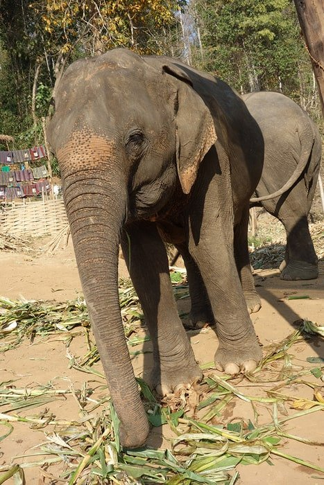The Best Adventurous Things To Do in Thailand For Backpackers, Elephant tour, Sanctuary,