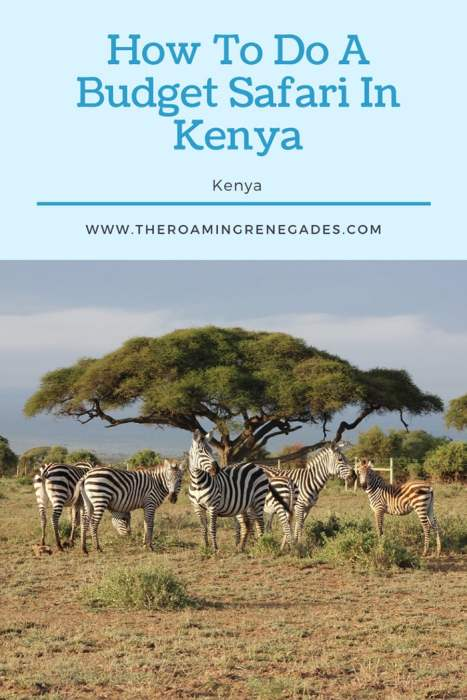 How to do a budget safari in Kenya