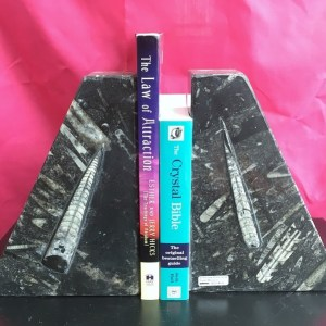 buy Fossil Book Ends