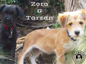 Zoro and Tarzan