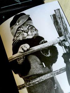 Civilized Cats book