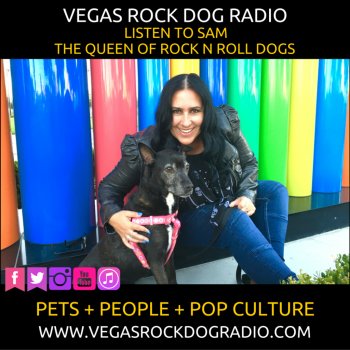 Listen Now To Vegas Rock Dog Radio, itchy pets, pet businesses, and why you need to talk to your vet