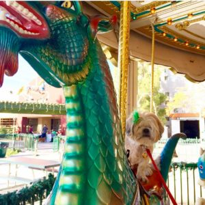 Odie on the green dragon!