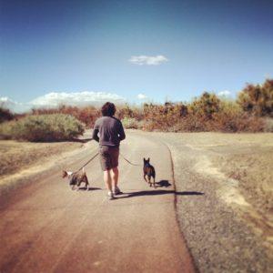 Jim walking Galaxy and Thornton pet travel