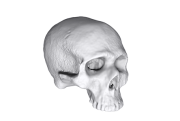 scanthumb_skull3
