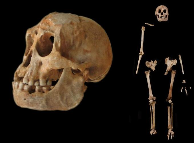 The Trials and Tribulations of Homo floresiensis: A Quick Introduction