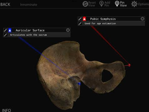 Dactyl & Skelly Pad: Apps for Digital Bone Identification and Inventorying