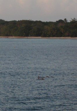 Pod of dolphins from the hotel.